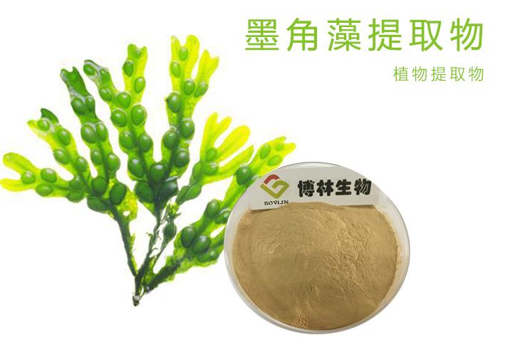 墨角藻提取物