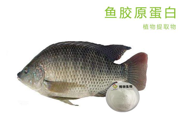 鱼胶原蛋白肽